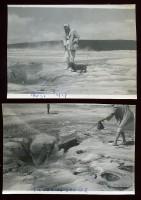 Canis Caloricus